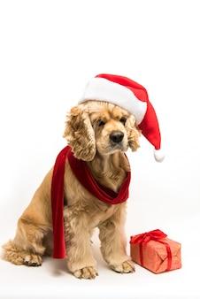 Amerikaanse cocker spaniel met kerstmuts