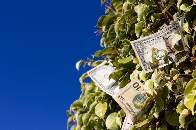 Amerikaanse dollarbiljetten op groene bladerenstruik over blauwe hemelachtergrond geld groeit op bomenconcept