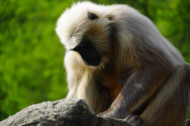 Amn aap eet iets