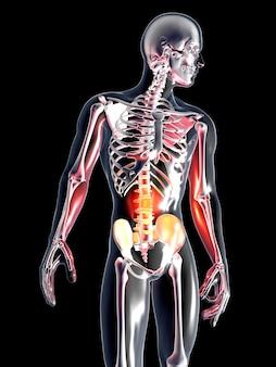 Anatomie - maag
