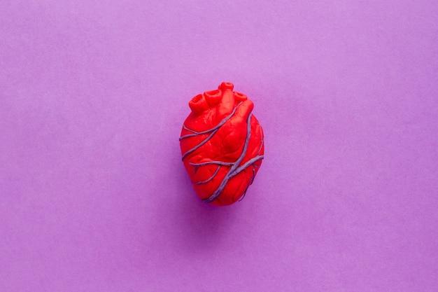 Anatomisch hart op lila