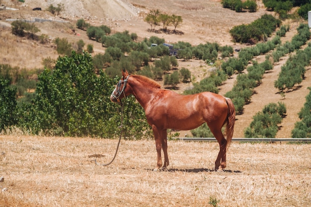 Andalusisch paard