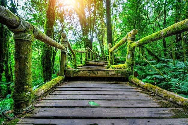 Ang ka-natuurpad in het nationale park doi inthanon, chiang mai, thailand.