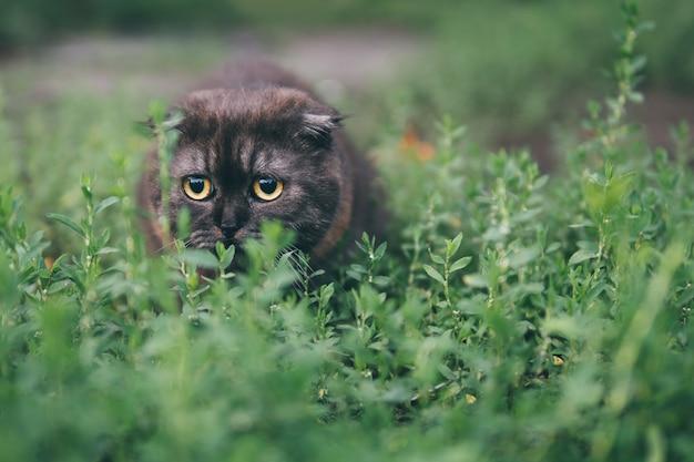 Angst kat emotie