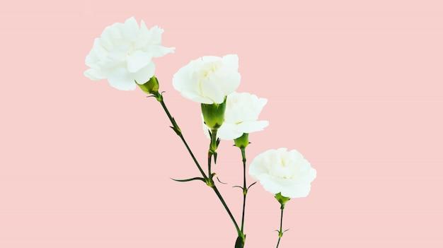 Anjer bloem