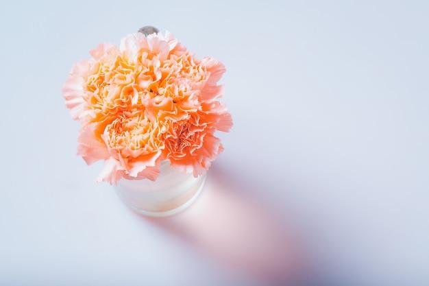 Anjer bloemen. zoete kleurenfilter