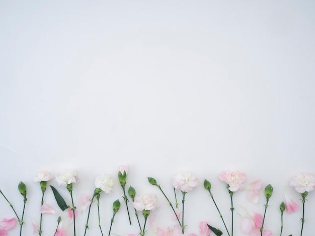 Anjersbloemen op een witte achtergrond