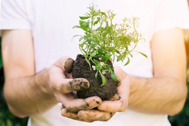 Anonieme man met stapel van grond en plant