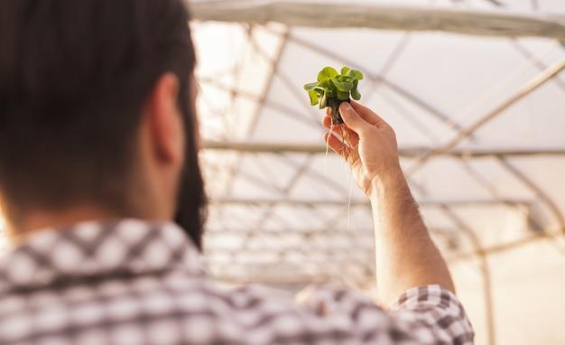 Anonieme mannelijke boer die zaailing onderzoekt
