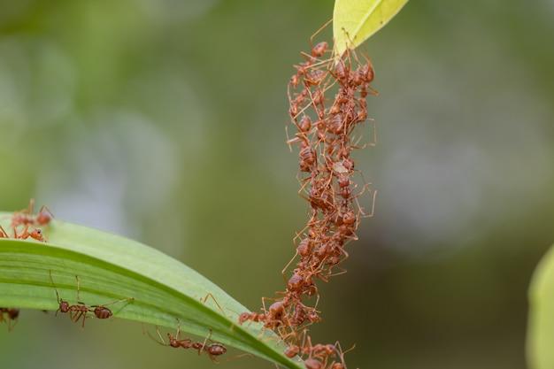 Ant-actie status.ant brugeenheidsteam
