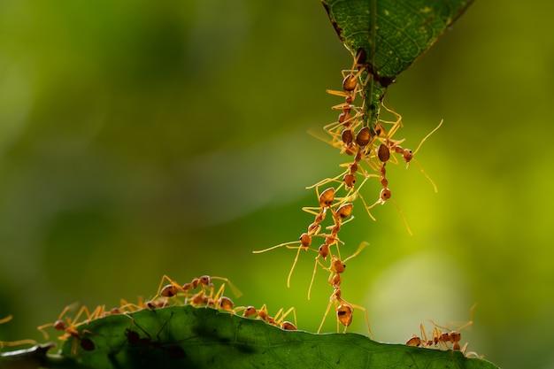 Ant-actie status. sluit geen eenheidsteam aan