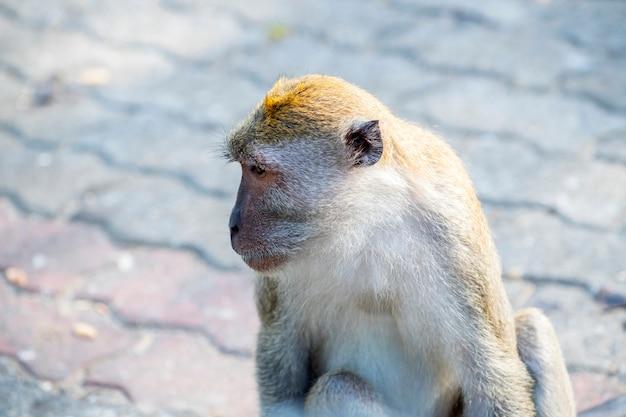 Apen die wachten om voedsel te ontvangen