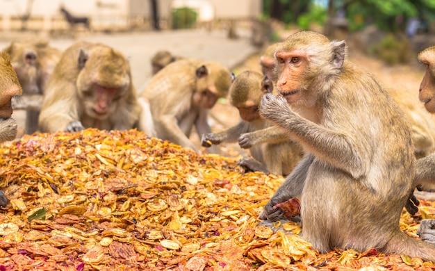 Apen eten, tempel in thailand.