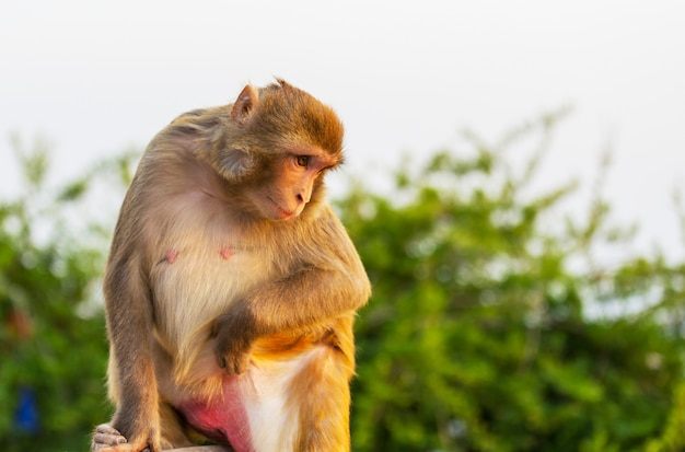 Apen in het tropische woud in thailand