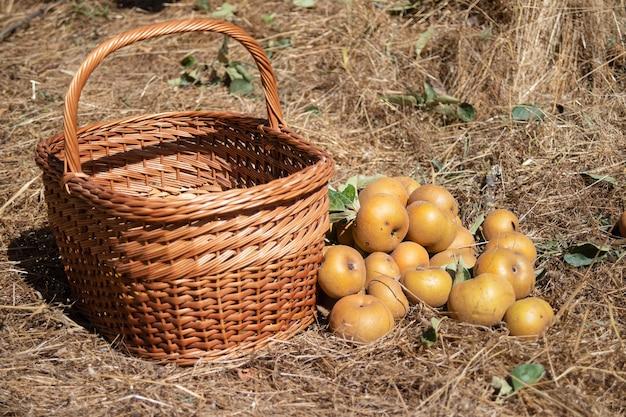 Appels dicht bij de mand op de grond