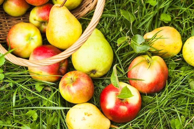 Appels en peren verspreid uit de mand op een gras in de tuin