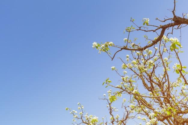 Appeltuin met bloeiende bomen