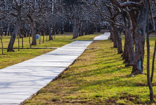 Appletree tuin met bladerloze bomen in de lente houten loopbrug op groen gras