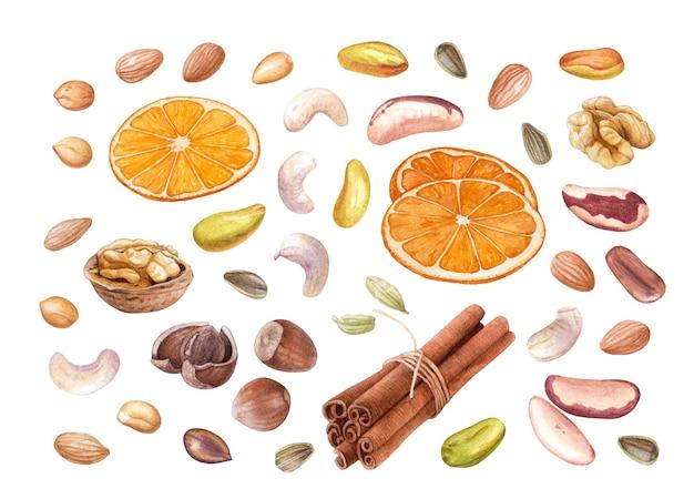 Aquarel amandelen, cashewnoten, pistachenoten, walnoten, pinda's, hazelnoten, cacaobonen, zonnebloempitten, kaneel, stukjes sinaasappel