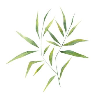 Aquarel bamboe laat bamboetakken een enkel element op een witte achtergrond