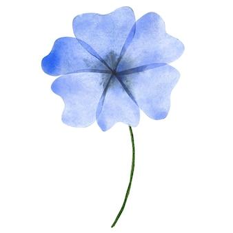 Aquarel blauwe bloem