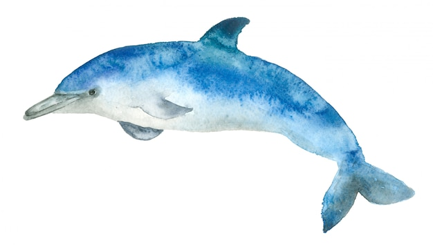 Aquarel blauwe dolfijn