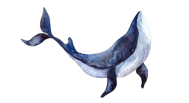 Aquarel blauwe grote walvis, met de hand geschilderde illustratie geïsoleerd op een witte achtergrond, realistische onderwaterdieren.