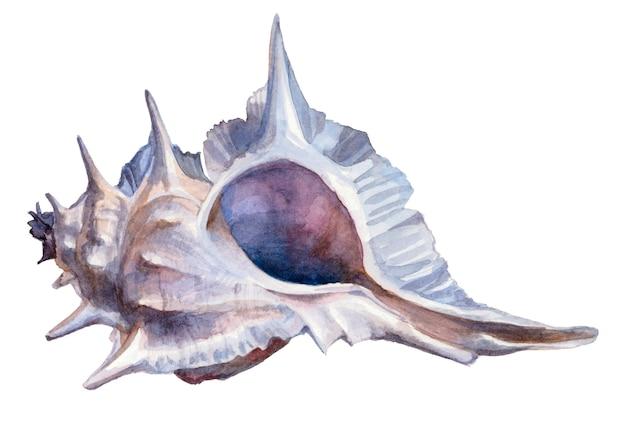 Aquarel blauwe zeeschelp op een witte achtergrond.
