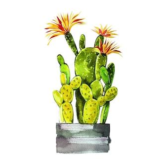 Aquarel cactus geïsoleerd op een witte achtergrond. het is perfect voor kaarten, posters, banners, uitnodigingen, wenskaarten, prints.