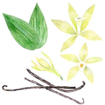 Aquarel collectie van gele vanille bloemen