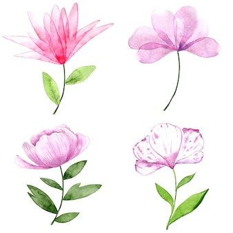 Aquarel collectie van roze en paarse bloemen geïsoleerd op een witte achtergrond