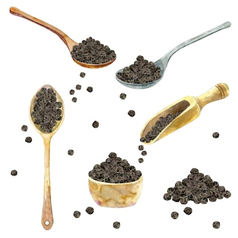 Aquarel collectie van zwarte peper.