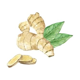 Aquarel gemberwortel met gehakte plakjes