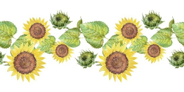 Aquarel grens met heldere zonnebloemen, bladeren en knoppen van de plant