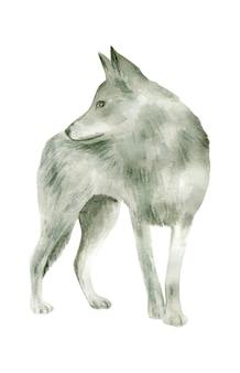 Aquarel grijze wolf geïsoleerd op witte achtergrond
