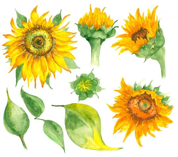 Aquarel hand getrokken zonnebloemen