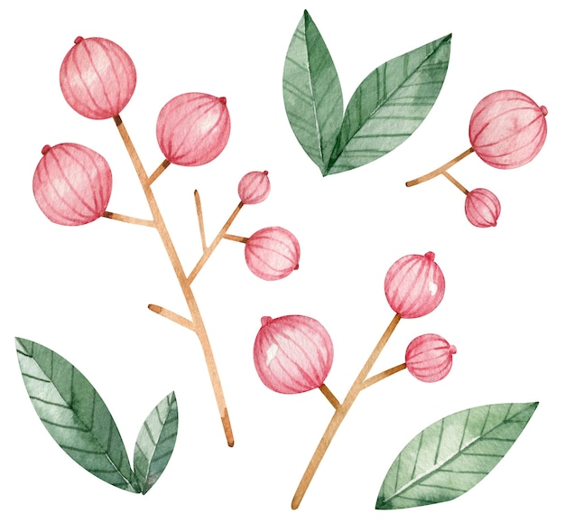 Aquarel heldere takken van rode bessen en groene bladeren geïsoleerd op de witte achtergrond. decoratieve rode bessen en groene bladeren.