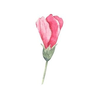 Aquarel hibiscus bloem geïsoleerd op wit