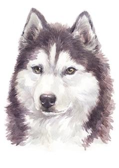 Aquarel hond schilderij, bruin-witte kleur siberische husky