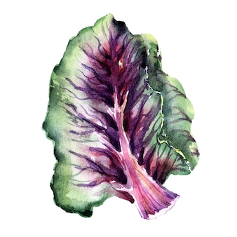 Aquarel illustratie met verschillende soorten kool. boerenkool