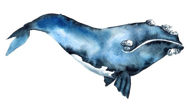Aquarel illustratie van een blauwe vinvis