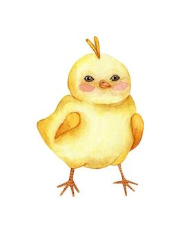 Aquarel illustratie van een kleine schattige gele kip staat. tekening voor kinderen gelukkig kuiken. religie, traditie, pasen. geïsoleerd op witte achtergrond. met de hand getekend.