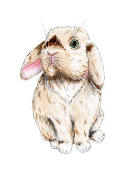 Aquarel illustratie van een schattig pluizig beige konijn pasen tekening van een haas leuke foto van een huisdier