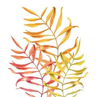 Aquarel illustratie van herfst tak bladeren geïsoleerd op wit.