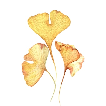Aquarel illustratie van herfstbladeren