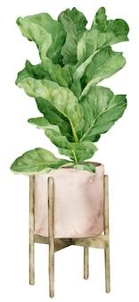 Aquarel illustratie van viool blad vijgenboom in de planter geïsoleerd. huisdecoratie. boho binnenontwerp.