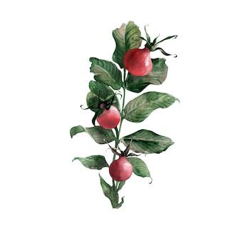 Aquarel kaders en randen met rijpe heldere rozenbottel