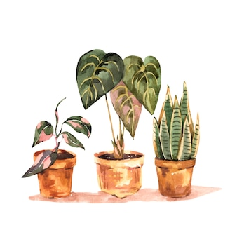 Aquarel kamerplanten, stedelijke jungle natuurlijke illustratie