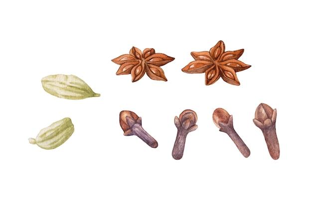 Aquarel kruiden geïsoleerd cardamon, anijs, kruidnagel.
