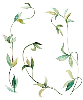 Aquarel kruipende planten en bladeren illustraties